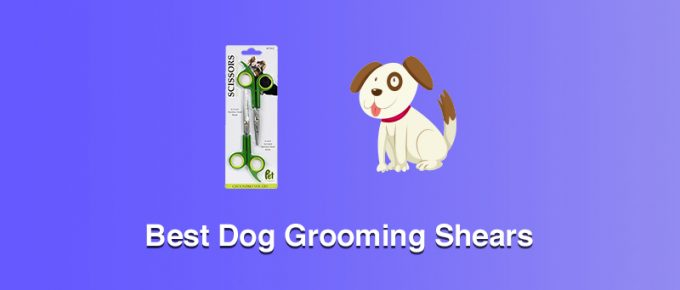 Best Dog Grooming Shears