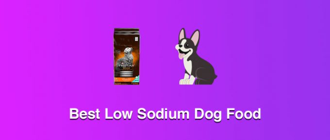 Best Low Sodium Dog Food