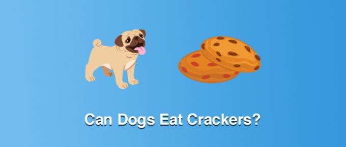 Can Dogs Eat Crackers